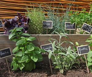 comment cultiver des herbes aromatiques carnivor boucherie charcuterie produits frais. Black Bedroom Furniture Sets. Home Design Ideas