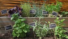 Comment cultiver des herbes aromatiques ?